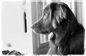 Service Dog Grants-Service Dog Training Grants